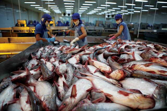 9 tháng, xuất khẩu cá tra đạt gần 1,2 tỷ USD