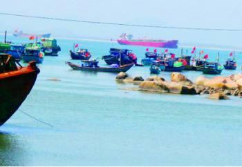 Quảng Nam: Ngư dân trúng đậm tôm nhí