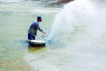Rearing disease-free Tra, Basa fish