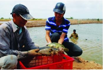 Kỹ thuật sản xuất giống cá song chấm nâu