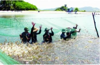 Khuyến ngư Quảng Ninh: Nhân rộng không dễ