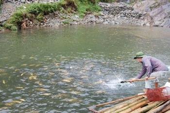 Thử nghiệm nuôi cá hồi sử dụng thức ăn có bổ sung enzyme amylase, phytase và protease