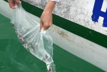 Hải Phòng: Nhiều hoạt động nổi bật tại Lễ hội truyền thống làng cá Cát Bà