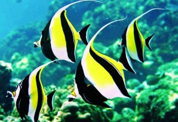 Một số loài cá cảnh đẹp nhất
