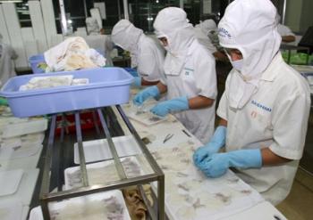 Năm 2017, xuất khẩu mực, bạch tuộc dự kiến giảm 5%