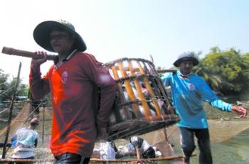 Tiền Giang: Thu lãi cao từ nuôi cá tra công nghiệp