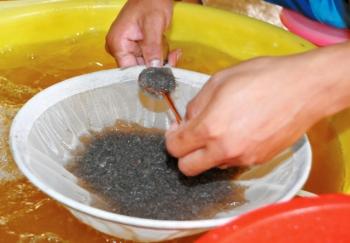 Xử lý nước và ương nuôi tôm giống vùng Nam bộ