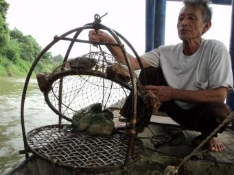 Anh vũ - loài cá được ví như linh hồn của dòng sông Lô đã biến mất