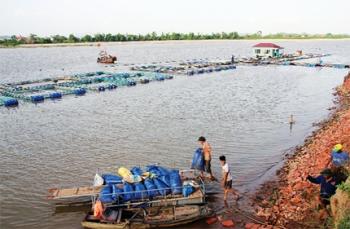 Cá lồng trên sông Kinh Thầy