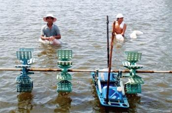 Bình Thuận: Bảo vệ thương hiệu tôm giống
