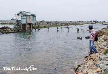 Nuôi trồng thủy sản ở Quảng Điền (Thừa Thiên - Huế): Thua lỗ do dịch bệnh