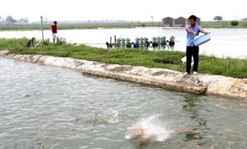 Gia Viễn (Ninh Bình): Nuôi cá trên ao nổi cho hiệu quả kinh tế cao