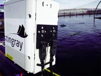 Ứng dụng công nghệ tia laser để tiêu diệt ký sinh trùng trên cá