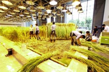 Nhật Bản: Phát triển nông nghiệp chọn lọc và chất lượng
