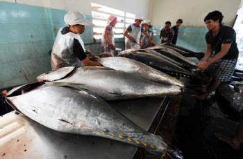 Hợp tác quốc tế xây dựng thương hiệu cá ngừ đại dương