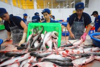 Trung Quốc trở thành thị trường lớn thứ 2 của cá tra Việt Nam, mừng hay lo?