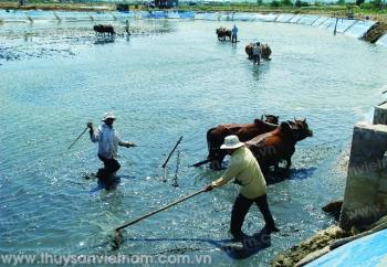 Quảng Trị: Phục hồi nuôi tôm sau ô nhiễm môi trường tại Triệu Lăng