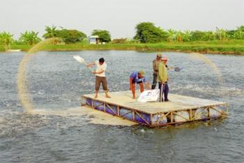 Làm gì để cá tra nuôi hiệu quả và bền vững?