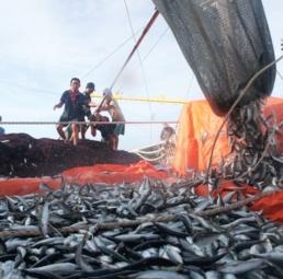 Việt nam, quốc gia biển của tương lai
