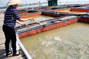 Kỹ thuật nuôi cá lồng bè trên sông