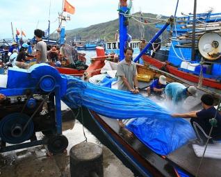 Giải pháp để vụ cá Nam thành công