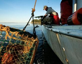 Canada: Ngành khai thác tôm hùm phát triển mạnh