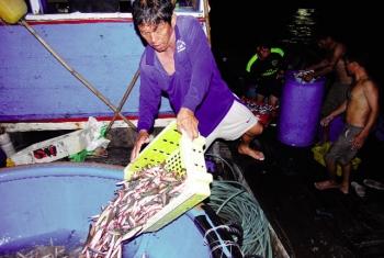 Theo chân ngư dân đánh bắt cá nục dạng