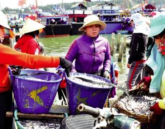 Biển được mùa, hải sản được giá