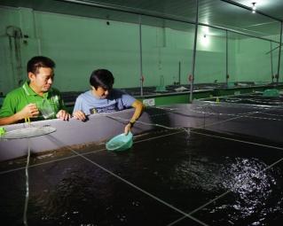 Sản xuất giống thủy sản cần được gỡ khó