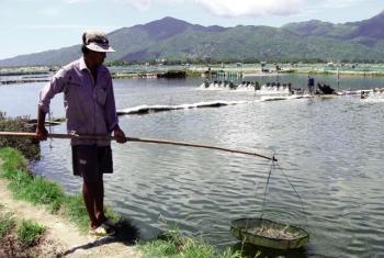 Phú Yên: Phát triển nuôi tôm xen ghép ở Đông Hòa