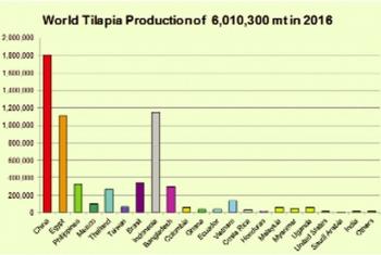 Cá rô phi Việt Nam có thể cạnh tranh trên thị trường