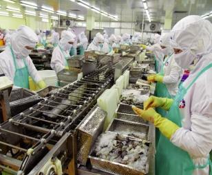 Xuất khẩu tôm: Rào cản giám sát dịch bệnh