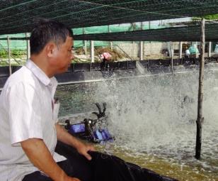 Ninh Thuận: Đòn bẩy phát triển nuôi tôm nước lợ