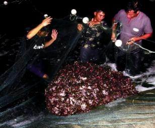 Quy trình The Semi-Biofloc: Hướng đi mới nuôi tôm ở Quảng Ninh