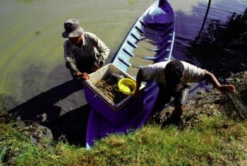 Tháng 9, giá tôm, cá tra tăng mạnh