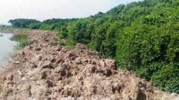 Tàn phá cả cánh rừng ngập mặn xanh ngút ngàn để nuôi tôm
