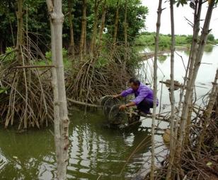 Một số biện pháp kỹ thuật nuôi tôm sinh thái trong rừng ngập mặn