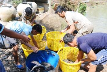 ĐBSCL: Thủy sản giảm giá, người dân thua lỗ
