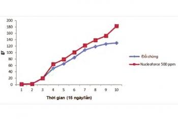 Nucleotide: Giải pháp cải thiện hệ miễn dịch và đường ruột