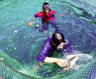 Xây dựng chiến lược phát triển thủy sản giai đoạn mới