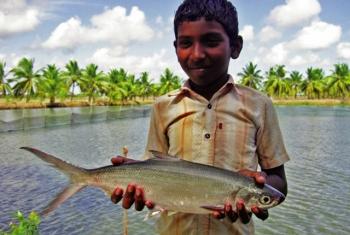 Thủy sản Ấn Độ: Phát triển bằng 3D mapping