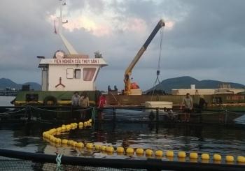 Hiệu quả kinh tế nuôi lồng công nghiệp cá chim (Trachinotus falcautus) ở Khánh Hòa
