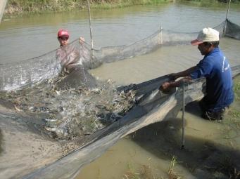 BĐKH ảnh hưởng xấu đến nuôi trồng thủy sản