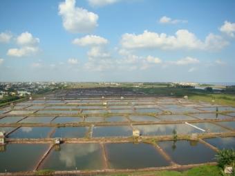 Phát triển nghề nuôi trồng thủy sản trong điều kiện BĐKH