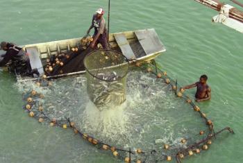 Vaccine mới cho cá da trơn