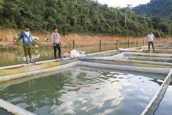 Điện Biên: Chuyển gấp các bè nuôi cá lồng sau sự cố vỡ bể chứa chất thải nhà máy sắn