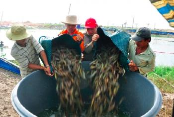 Thủy sản: Triển vọng sáng cho năm 2018