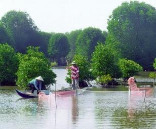 Quy định nuôi thủy sản trong khu vực rừng ven biển