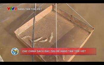 Chương trình Nâng tầm tôm Việt số 3