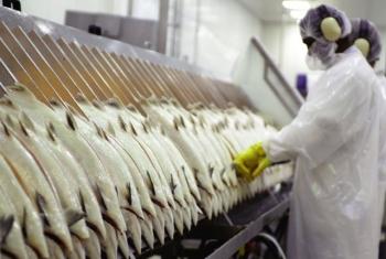 Châu Âu: Kiểm soát chặt thủy sản nhập khẩu
